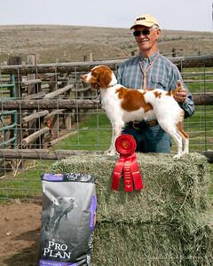 2nd Place Gun Dog Shiloh's Swift Kiss A Taq Handler: Michael Frane Owners: Deborah and Michael Frane