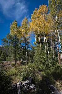 Foliage on West Side, Rocky Mountain NP