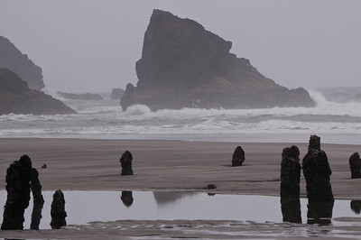 Petrified Forest, Neskowin, OR