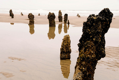 Petrified Forest, Neskowin, Oregon