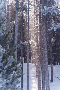 snowy light peeking through woods