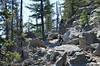 Up the horse trail around Jenny Lake