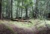 On Cedar Trail