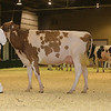 Westerner16_Holstein_IMG_4142
