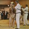 Westerner16_Holstein_IMG_4135