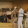 Westerner16_Holstein_IMG_4134