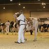 Westerner16_Holstein_IMG_4137