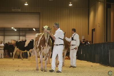 Westerner Holstein Cows 2016