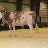 Westerner16_Holstein_IMG_4145