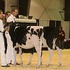 Westerner16_Holstein_IMG_3487