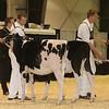 Westerner16_Holstein_IMG_3489
