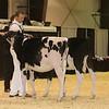 Westerner16_Holstein_IMG_3486