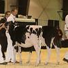 Westerner16_Holstein_IMG_3488