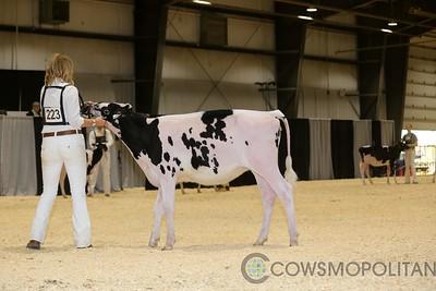 Red Deer Holstein Heifers 2017