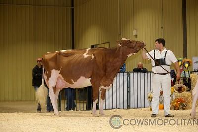 Red Deer Holstein Sr Cows 2017