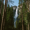 tall trees and water fall