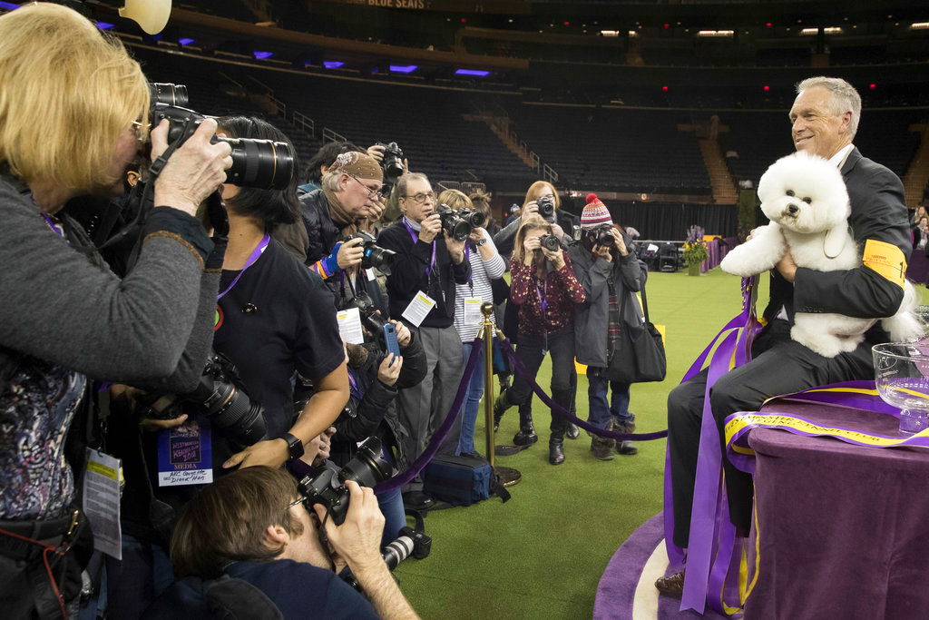 . Handler Bill McFadden is surrounded by photographers as he poses for photos with Flynn, a bichon frise, after Flynn won best in show during the 142nd Westminster Kennel Club Dog Show, Tuesday, Feb. 13, 2018, at Madison Square Garden in New York. (AP Photo/Mary Altaffer)