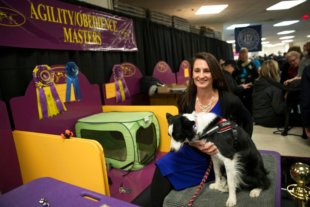. Handler Jessica Ajoux and Fame, a border collie, are seen in the benching are during the 142nd Westminster Kennel Club Dog Show, Friday, Jan. 12, 2018, at Madison Square Garden in New York. Fame won the Westminster Kennel Club dog show\'s agility championship. (AP Photo/Mary Altaffer)