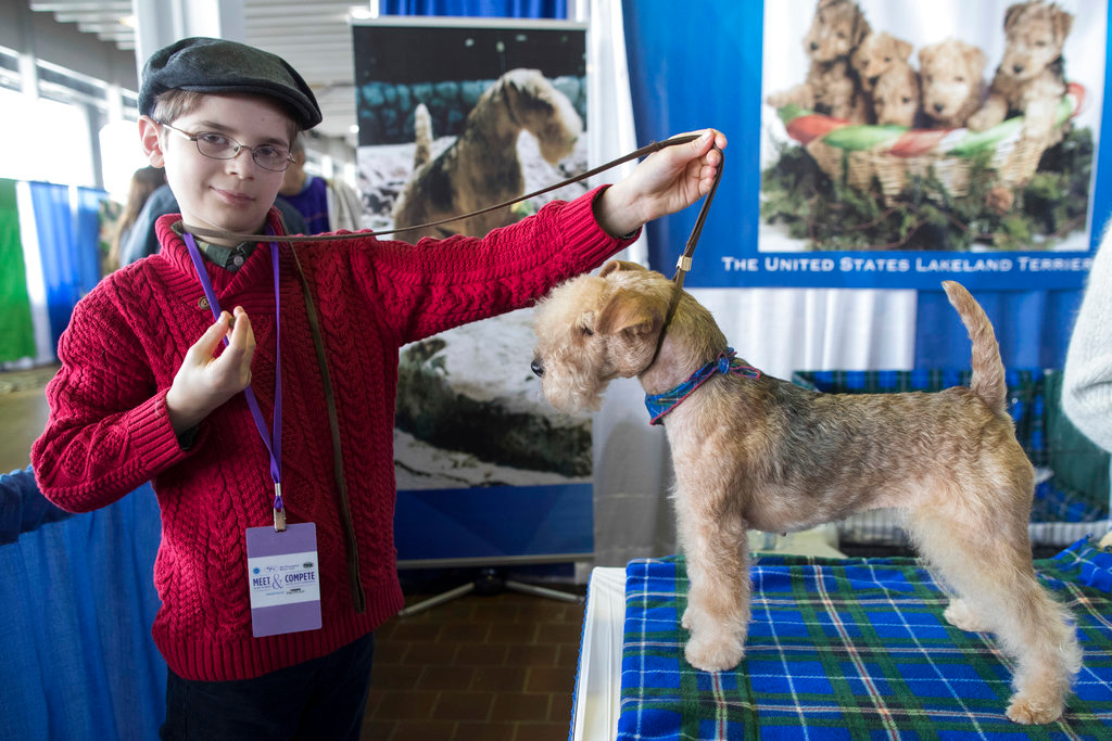 . In this Saturday, Feb. 10, 2018, photo, Fenric Towell poses for a photo with his lakeland terrier Missy during the meet the breeds companion event to the Westminster Kennel Club Dog Show in New York. (AP Photo/Mary Altaffer)