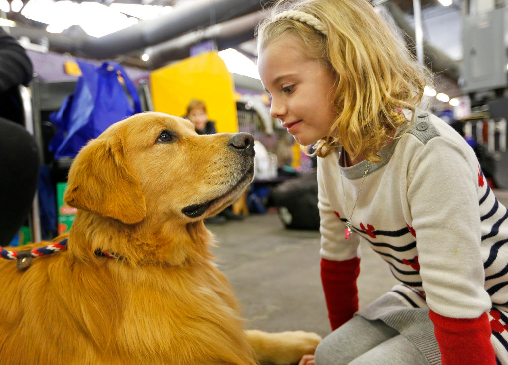 . Evangeline Wendt, 7, right, visits with a golden retriever named Tank during the 142nd Westminster Kennel Club Dog Show in New York, Tuesday, Feb. 13, 2018. (AP Photo/Seth Wenig)