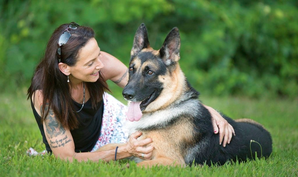 . In this 2017 image provided by Sue Condreras,  Fanucci, a German shepherd, poses with handler Sue Condreras last summer in upstate New York. Fanucci�s right rear leg was shattered in a van accident in 2014, leaving his show career in doubt. He has become one of the nation�s top German shepherds going into the Wesminster Kennel Club show that begins Monday. (Kenneth Beatty/Sue Condreras via AP)