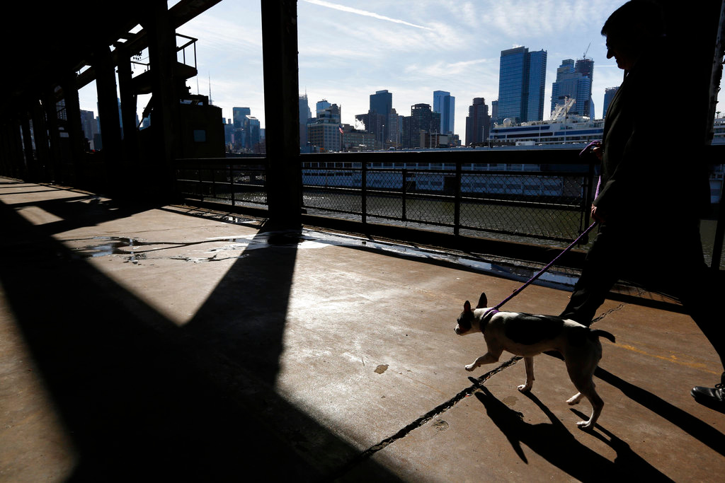 . A man takes a dog for walk just outside the benching area during the 142nd Westminster Kennel Club Dog Show in New York, Tuesday, Feb. 13, 2018. (AP Photo/Seth Wenig)