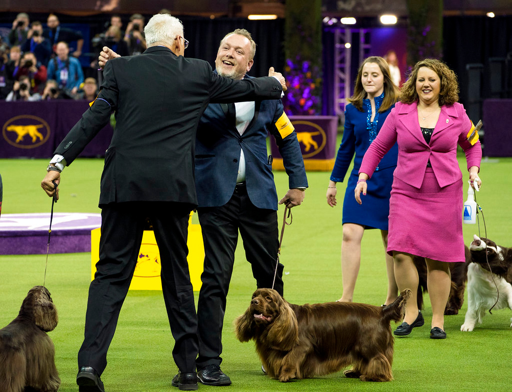 . Bean, a Sussex Spaniel, handled by Per Ingar Rismyhr, center, is congratulated after winning the Sporting group during the 142nd Westminster Kennel Club Dog Show, Tuesday, Feb. 13, 2018, at Madison Square Garden in New York. (AP Photo/Craig Ruttle)