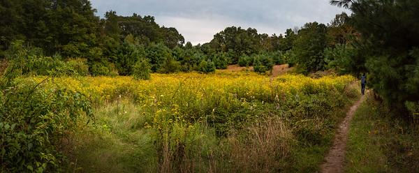 Burchard Park Trail