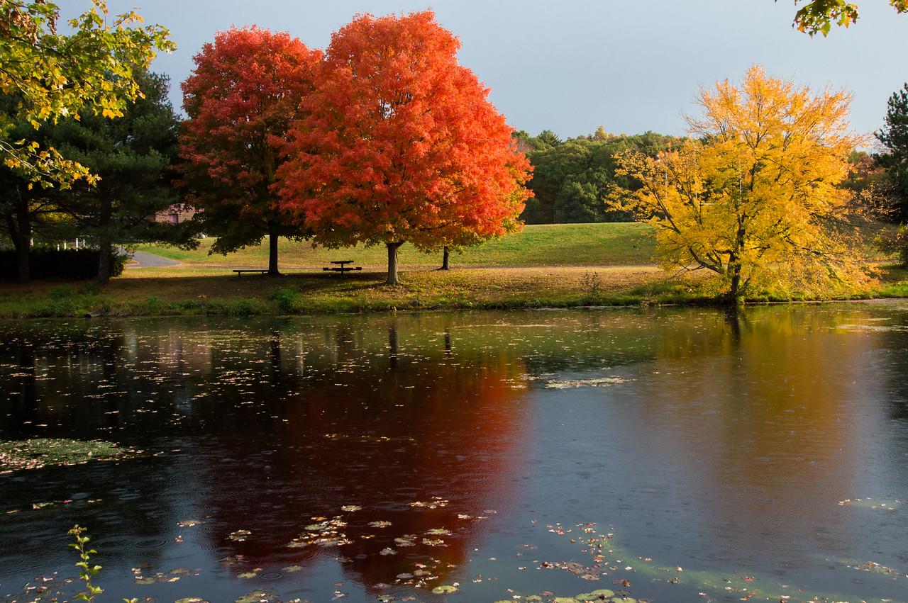 High School Pond Foliage