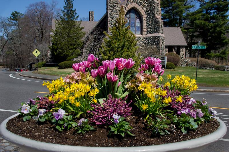 Flowers in Weston Town Center
