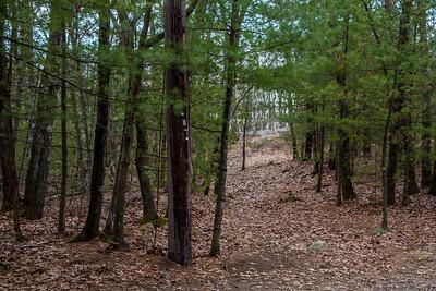 Cat Rock Park Trail