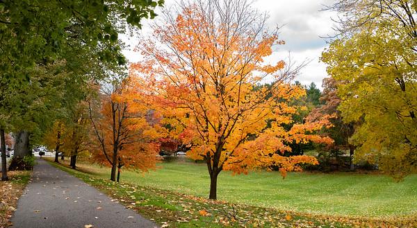 Foliage Around Town Green