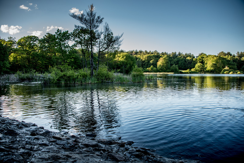 Hobbs Pond at Cat Rock Park