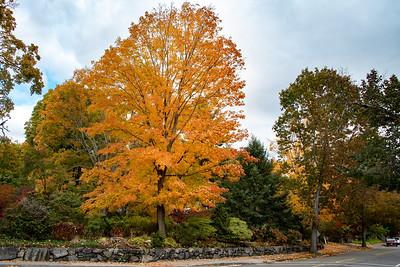 Foliage on Boston Post Road