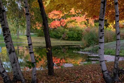 Weston High School pond