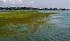 Wetlands.  Very.<br /> Westport Harbor