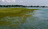 Wetlands.  Very.<br /> Westport Harbor