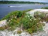 Natural garden atop Ship Rock