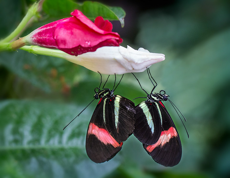 Butterfly Coupling