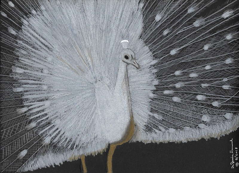"""""""White Peacock"""" (colored pencil) by Dr Jessie Hummel"""