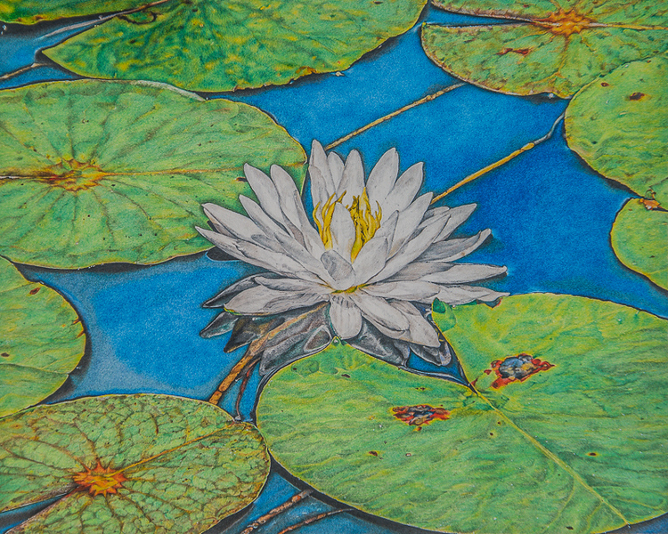 """Nature's Serenity "" (watercolor pencils) by Sandra Burm"