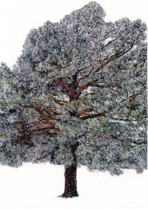 """""""Ann's Pine with Hoarfrost"""" (watercolor and gouache) by Dan Kirchhefer"""