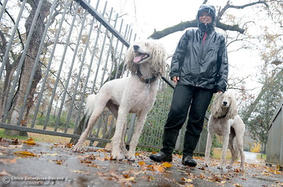 Joni Mitchell of Chico enjoys a walk in the rain along the Five Mile footbridge with her dogs Lady and Emme as heavy rain arrives in Chico, Calif. Thurs. Dec. 15, 2016. (Bill Husa -- Enterprise-Record)