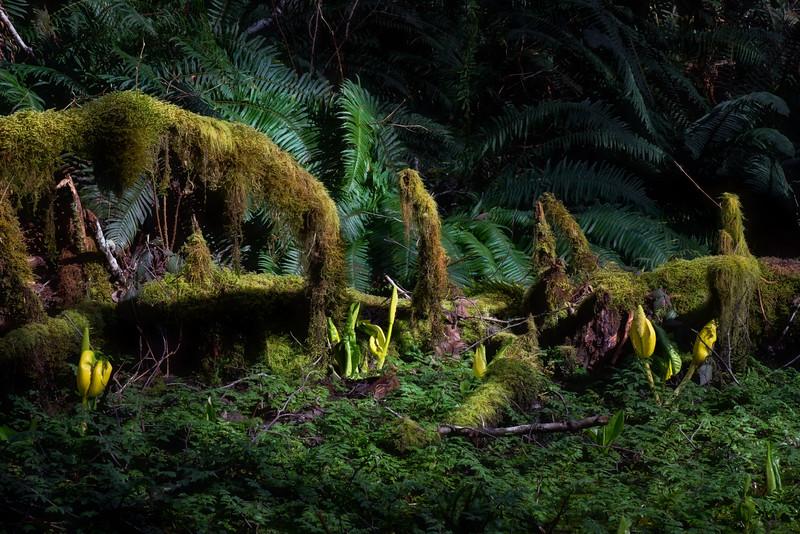 Woodland Bog, Joyce Valley, Washington