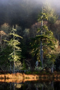 """Morning Light"", Lake O'Neil, Cape Disappointment State Park near Ilwaco, WA"