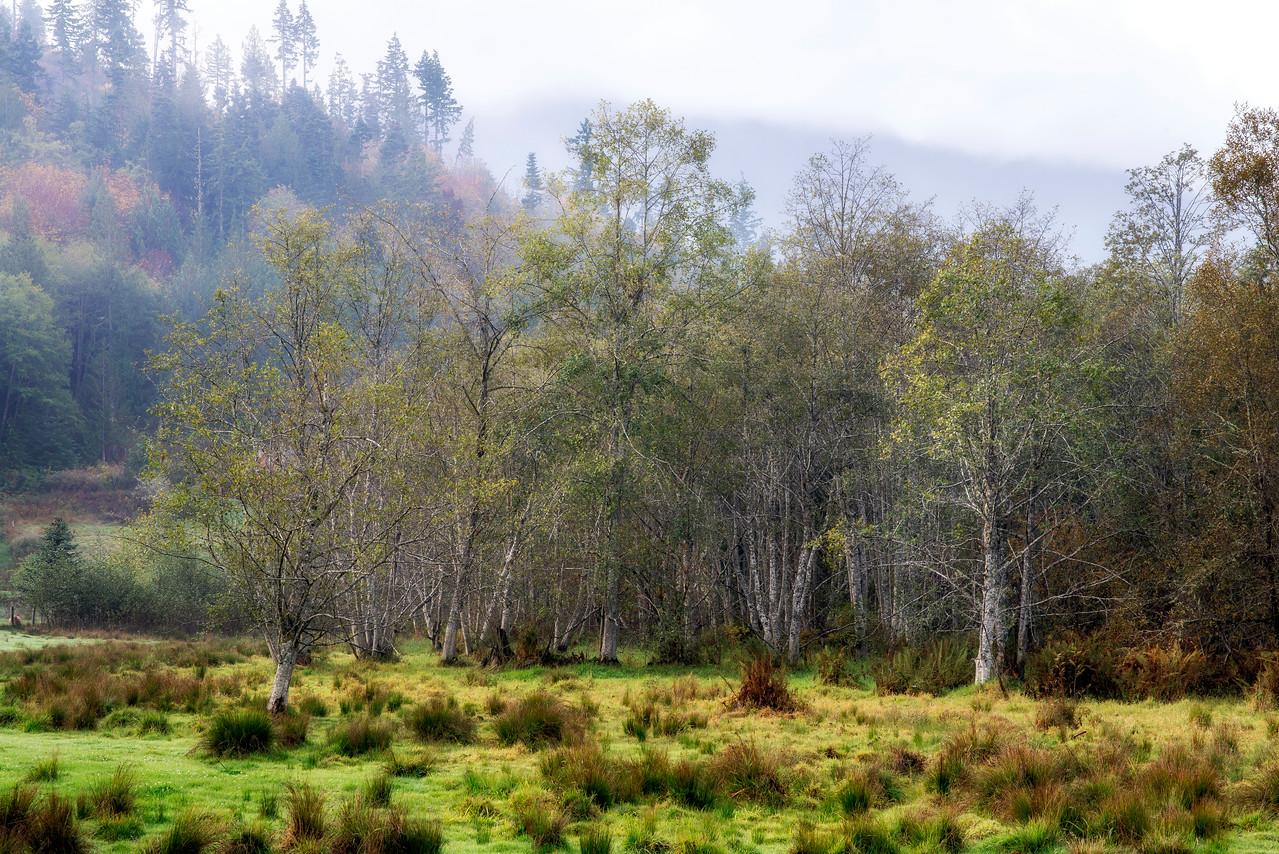 Wetland Habitat near Joyce, Washington