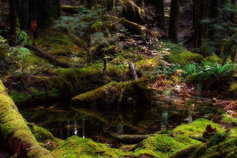 Woodland Bog, Olympic National Park, Washington