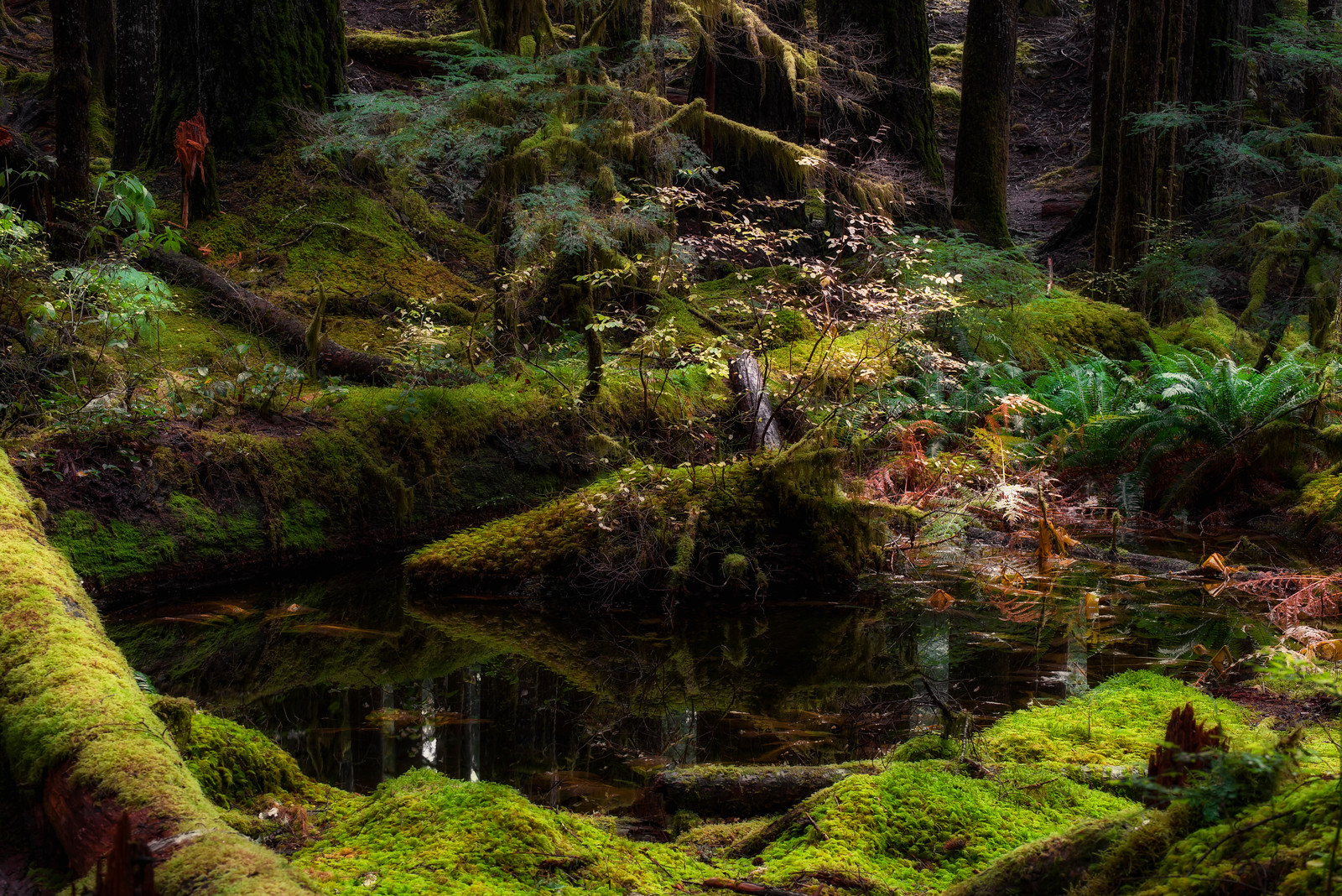 Woodland Bog, Olympic National Park, Washington