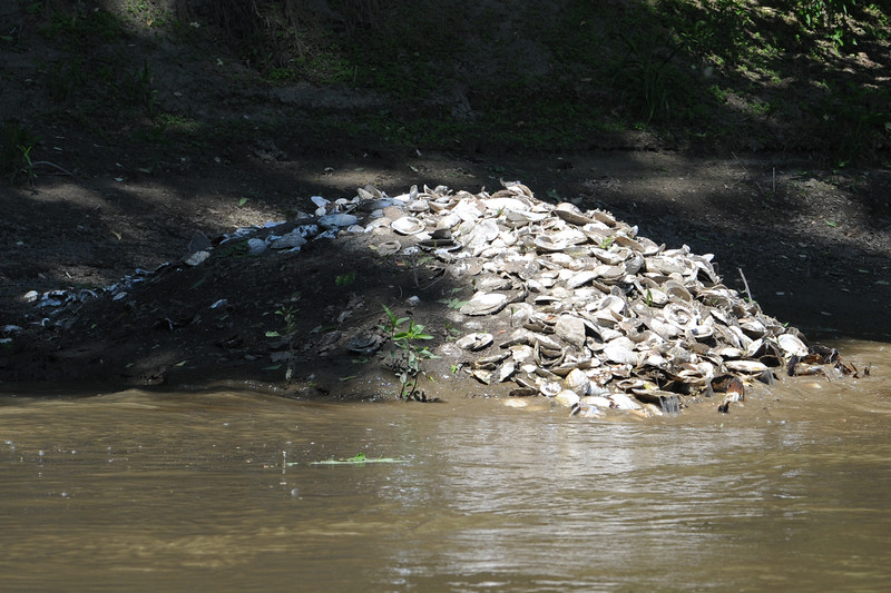 Mussel bed in HRI Conservation Area on Wabash River near Hewitt