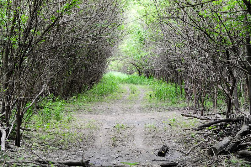 Adams Tract, Big Raccoon Creek, Parke County